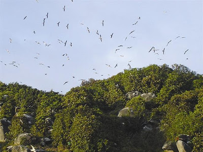 Đảo chim ở Quảng Bình