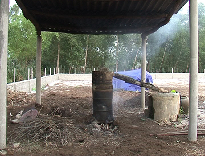 Sản xuất dầu tràm ở Quảng Hưng